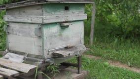 Muitas abelhas voam na colmeia filme