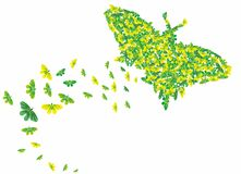 Muitas borboletas diferentes Imagem de Stock Royalty Free