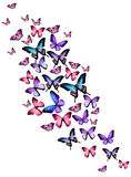 Muitas borboletas diferentes no fundo branco Imagem de Stock
