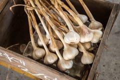 Muitas cabeças da secagem do alho em uma caixa de madeira Foto de Stock Royalty Free