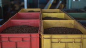 Muitas caixas do chá preto no armazém da fábrica do chá Fotografia de Stock