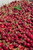 Muitas cerejas maduras vermelhas em um escaninho pronto para ser empacotado para a venda imagens de stock royalty free