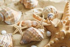 Muitas conchas do mar e estrela do mar na areia do mar, close up F?rias de ver?o fotografia de stock