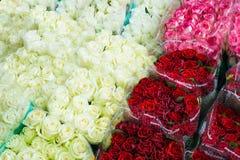 Muitas cores das rosas Imagens de Stock