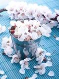 Muitas cores pequenas e bonitas Imagem de Stock Royalty Free