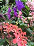 Muitas flores Fotos de Stock