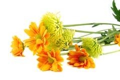 Muitas flores coloridas diferentes do outono Imagens de Stock