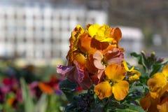 muitas flores no parque fotografia de stock