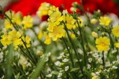 Muitas flores pequenas Fotos de Stock