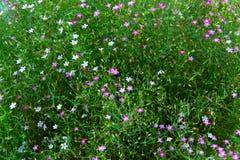 Muitas flores pequenas Imagens de Stock Royalty Free