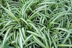 Muitas folhas com listras claras vegeta??o densa Fundo fotografia de stock royalty free