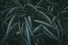 Muitas folhas com listras claras vegeta??o densa Fundo fotografia de stock