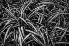Muitas folhas com listras claras vegeta??o densa Fundo fotos de stock