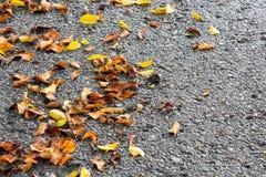 Muitas folhas da queda com fundo do cimento Fotos de Stock