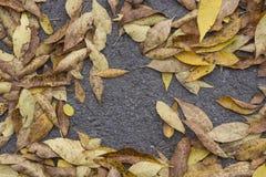 Muitas folhas de outono Imagem de Stock