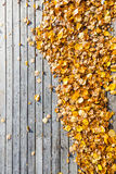 Muitas folhas do amarelo no assoalho de madeira do terraço Fotos de Stock