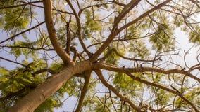 Muitas folhas do verde Fotos de Stock Royalty Free