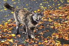 Muitas folhas e gato da queda com fundo do cimento Foto de Stock Royalty Free