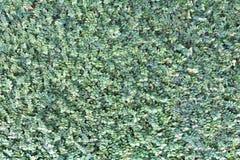 Muitas folhas pequenas como o fundo Foto de Stock Royalty Free