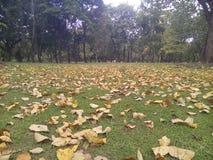 Muitas folhas secadas foto de stock