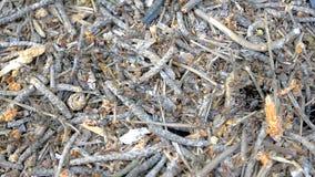 Muitas formigas, cada fazer seu trabalho video estoque