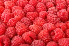 Muitas framboesas vermelhas doces Fotografia de Stock