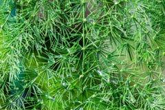 Muitas gotas de água na folha verde pequena da árvore do ramo Imagens de Stock Royalty Free