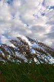 Muitas hastes dos juncos verdes crescem da água do rio sob o céu azul nebuloso Juncos ímpares com haste longa Foto de Stock