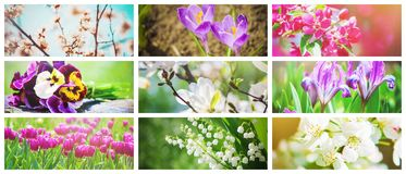 Muitas imagens das flores collage Foto de Stock Royalty Free