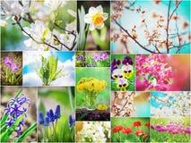 Muitas imagens das flores collage Fotografia de Stock Royalty Free