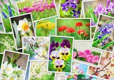 Muitas imagens das flores collage Fotos de Stock Royalty Free