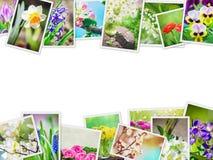 Muitas imagens das flores collage Fotos de Stock