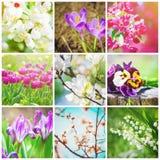 Muitas imagens das flores collage Imagens de Stock