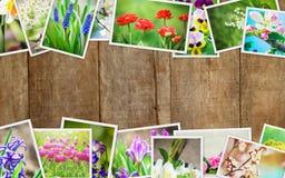 Muitas imagens das flores collage Fotografia de Stock
