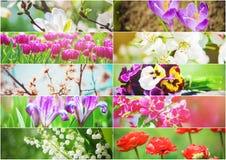 Muitas imagens das flores collage Imagem de Stock Royalty Free