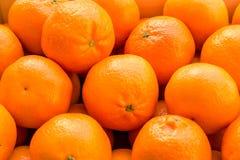Muitas laranjas e tangerinas em um ninho fotografia de stock