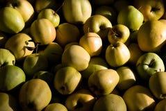 Muitas maçãs amarelas e verdes Fotografia de Stock Royalty Free