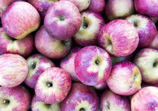 Muitas maçãs vermelhas imagem de stock royalty free
