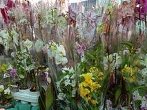 Muitas orqu?deas do phalaenopsis na venda imagens de stock