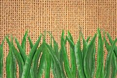 Muitas pimentas frias quentes verdes na textura de linho Imagem de Stock Royalty Free