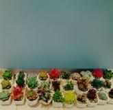Muitas plantas do cacto nos potenciômetros imagens de stock royalty free