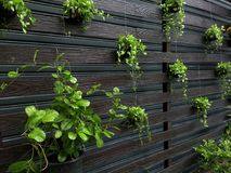 Muitas plantas estão crescendo na decoração do jardim Fotografia de Stock
