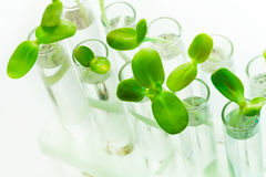 Muitas plantas verdes em uns tubos de ensaio na tabela branca Imagens de Stock Royalty Free