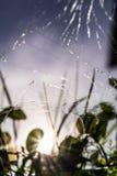 Muitas quebras na tela do telefone celular, no foco seletivo, na reflexão no vidro da grama verde, no céu azul e no sol Fotos de Stock Royalty Free