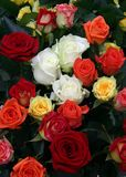 Muitas rosas imagens de stock