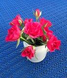 Muitas rosas vermelhas Fotos de Stock