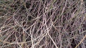 muitas varas dos emaranhados junto em um jardim Imagens de Stock