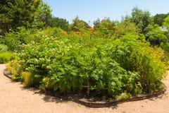 Muitas variedades de plantas que são tudo esverdeiam Imagens de Stock Royalty Free