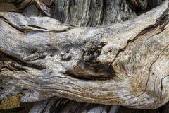 Muito bem, scrollwork detalhado na madeira lançada à costa no lago flagstaff, northw imagem de stock
