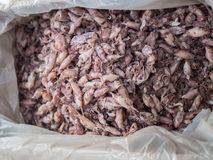 Muito calamar secado Fotografia de Stock Royalty Free